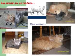 Как можно их не любить… Мои кошки…