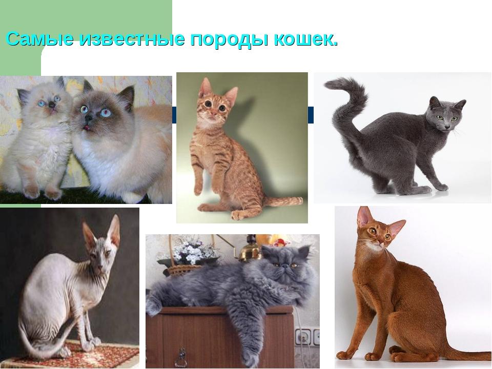 Самые известные породы кошек.