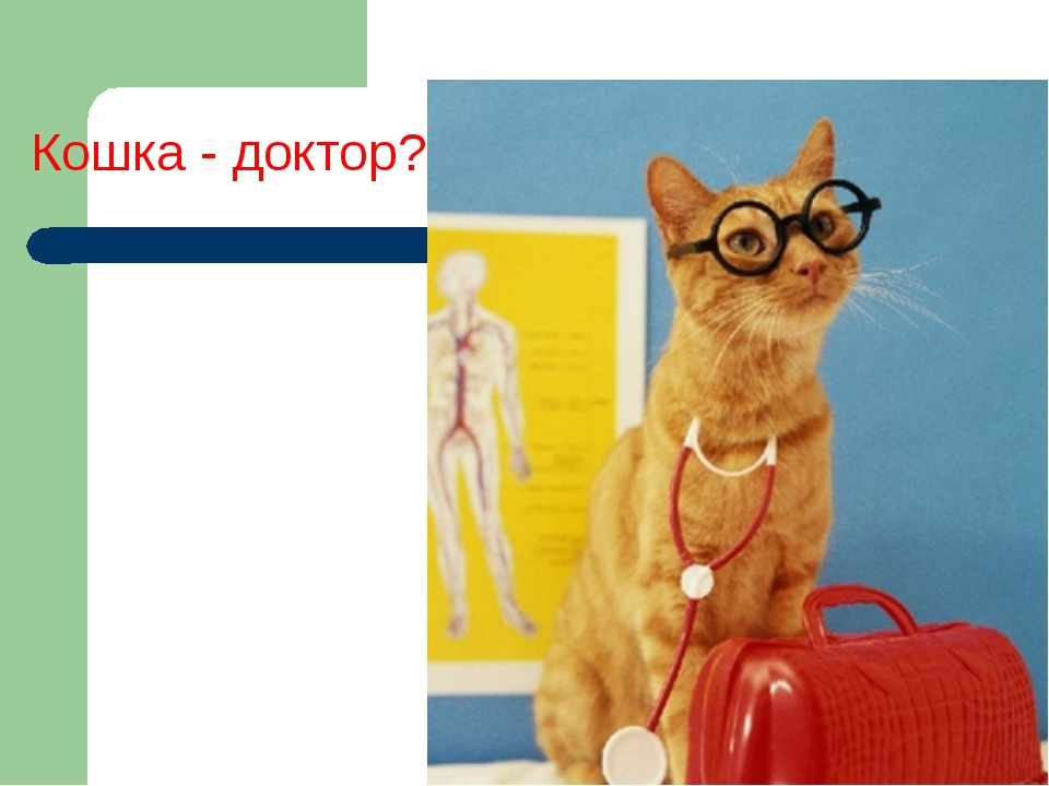 Кошка - доктор?