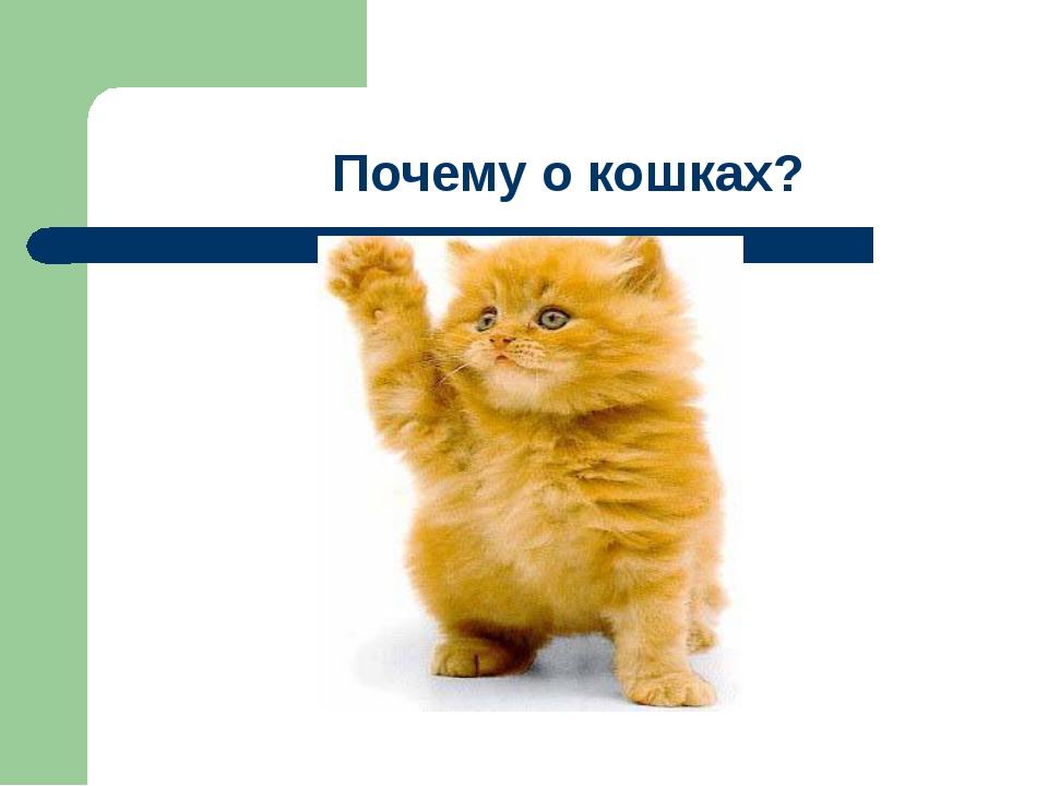 Почему о кошках?