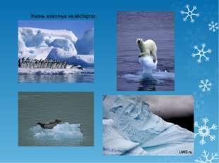 Жизнь животных на айсбергах.