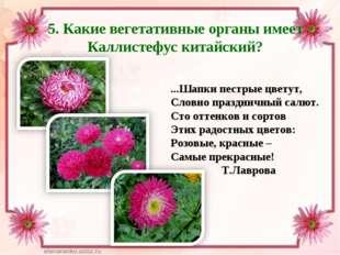 5. Какие вегетативные органы имеет Каллистефус китайский? ...Шапки пестрые цв
