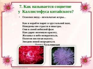 7. Как называется соцветие у Каллистефуса китайского? Осколки звезд – игольча