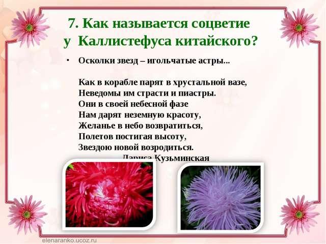 7. Как называется соцветие у Каллистефуса китайского? Осколки звезд – игольча...