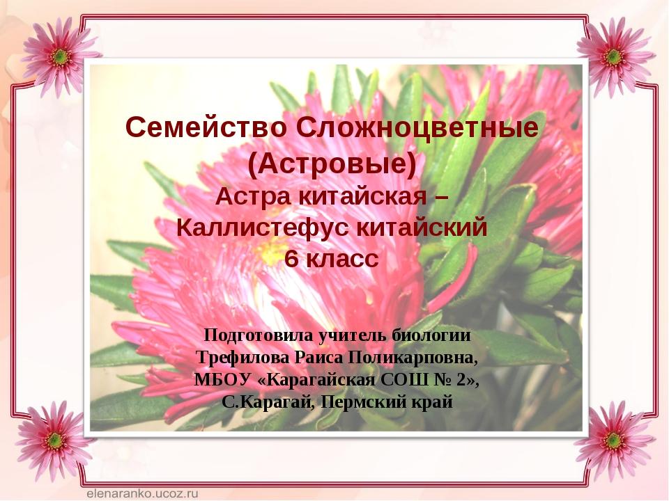 Семейство Сложноцветные (Астровые) Астра китайская – Каллистефус китайский 6...