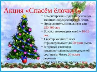 Акция «Спасём ёлочку!» Ель сибирская – одна из основных хвойных пород сибирск