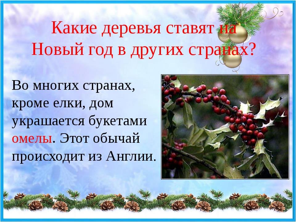Какие деревья ставят на Новый год в других странах? Во многих странах, кроме...