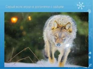 Серый волк играл в догонялки с зайцем
