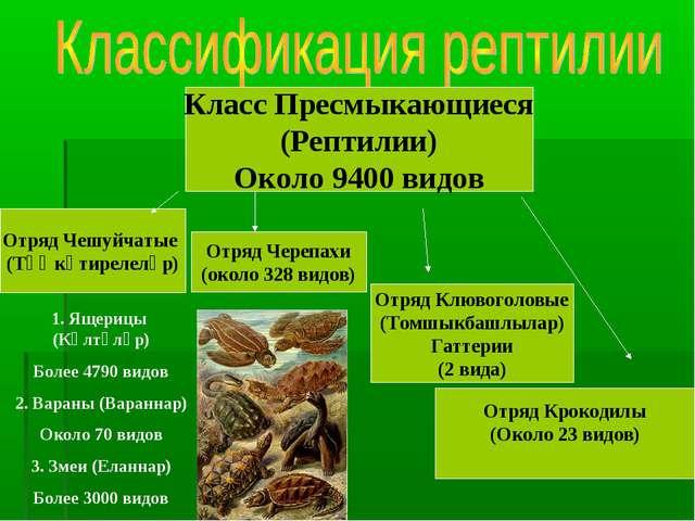 Класс Пресмыкающиеся (Рептилии) Около 9400 видов Отряд Чешуйчатые (Тәңкәтирел...