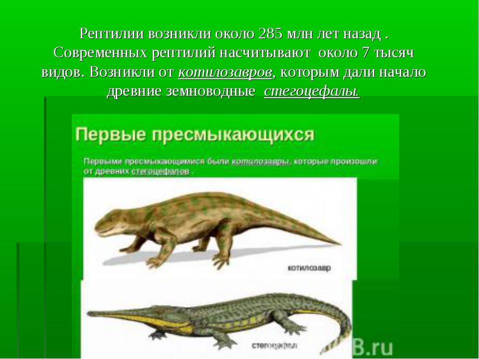 Рептилии возникли около 285 млн лет назад . Современных рептилий насчитывают...