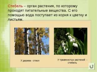 Стебель – орган растения, по которому проходят питательные вещества. С его по