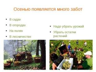 Осенью появляется много забот В садах В огородах На полях В лесничестве Надо
