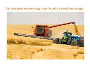За посевами нужен уход, сам по себе урожай не придет.