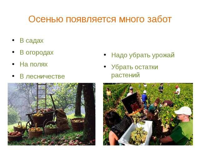 Осенью появляется много забот В садах В огородах На полях В лесничестве Надо...