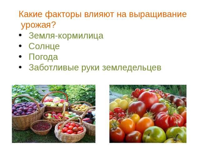 Какие факторы влияют на выращивание урожая? Земля-кормилица Солнце Погода Заб...