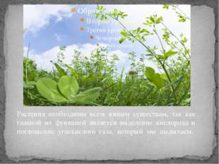 Растения необходимы всем живым существам, так как главной их функцией являетс