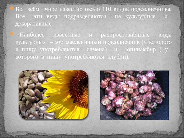 Во всём мире известно около 110 видов подсолнечника. Все эти виды подразделяю...