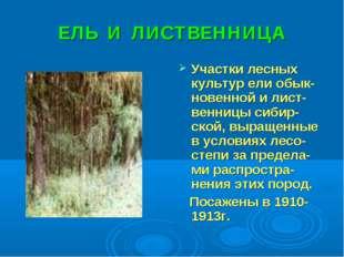 ЕЛЬ И ЛИСТВЕННИЦА Участки лесных культур ели обык-новенной и лист-венницы сиб