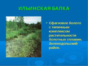 ИЛЬИНСКАЯ БАЛКА Сфагновое болото с типичным комплексом растительности болотны