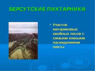 БЕРСУТСКИЕ ПИХТАРНИКИ Участок материковых хвойных лесов с самыми южными насаж