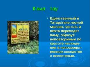 Кзыл тау Единственный в Татарстане лесной массив, где ель и пихта переходят К