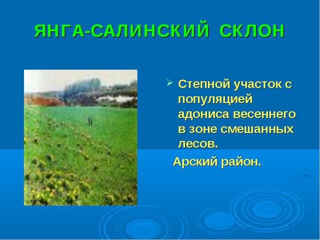 ЯНГА-САЛИНСКИЙ СКЛОН Степной участок с популяцией адониса весеннего в зоне см...