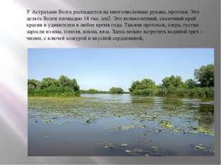 У Астрахани Волга распадается на многочисленные рукава, протоки. Это дельта