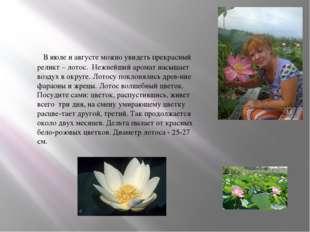 . В июле и августе можно увидеть прекрасный реликт – лотос. Нежнейший аромат