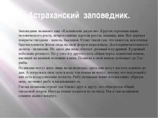 Астраханский заповедник. Заповедник называют еще «Каспийские джунгли». Кругом