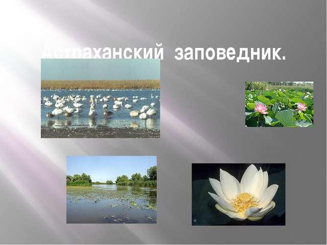 Астраханский заповедник.