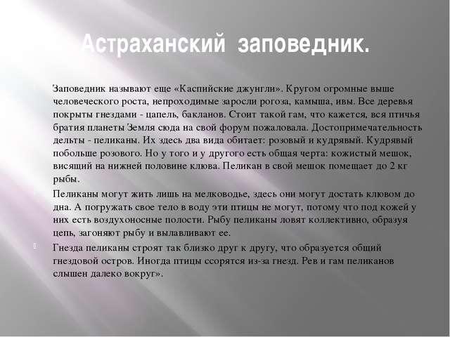 Астраханский заповедник. Заповедник называют еще «Каспийские джунгли». Кругом...