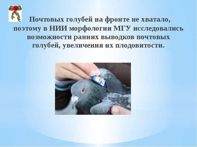 Почтовых голубей на фронте не хватало, поэтому в НИИ морфологии МГУ исследов...