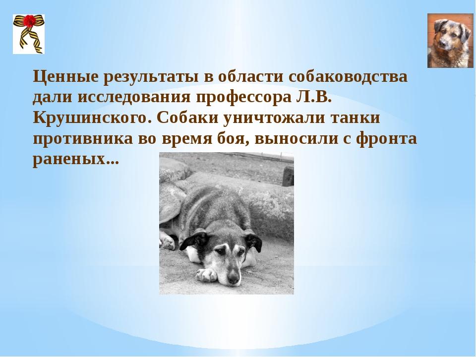 Ценные результаты в области собаководства дали исследования профессора Л.В....
