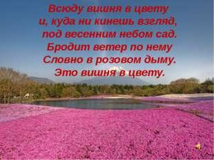 Всюду вишня в цвету и, куда ни кинешь взгляд, под весенним небом сад. Бродит