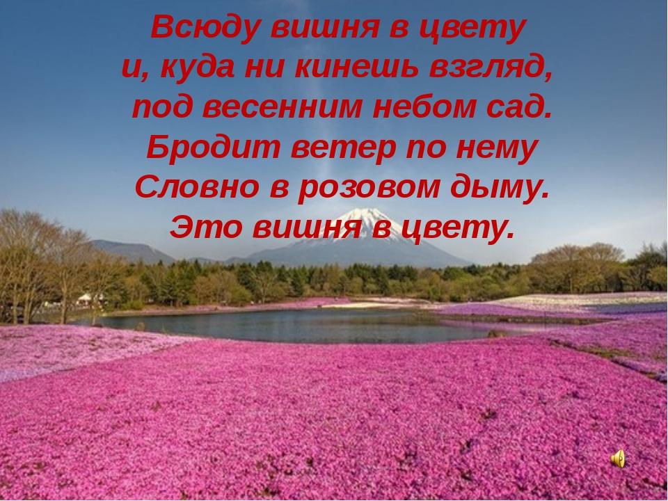 Всюду вишня в цвету и, куда ни кинешь взгляд, под весенним небом сад. Бродит...