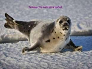 Тюлень. Он питается рыбой.