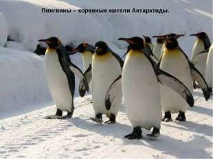 Пингвины – коренные жители Антарктиды.