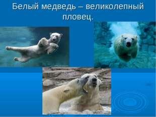 Белый медведь – великолепный пловец.