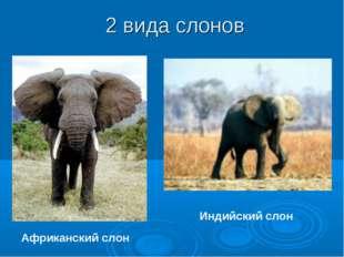 2 вида слонов Африканский слон Индийский слон