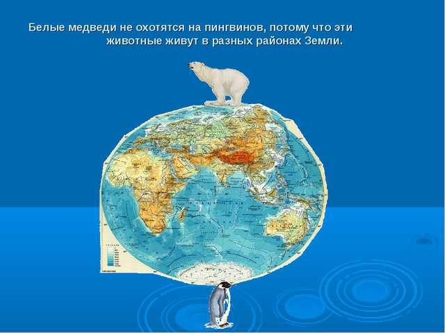 Белые медведи неохотятся напингвинов, потому что эти животные живут вразны...