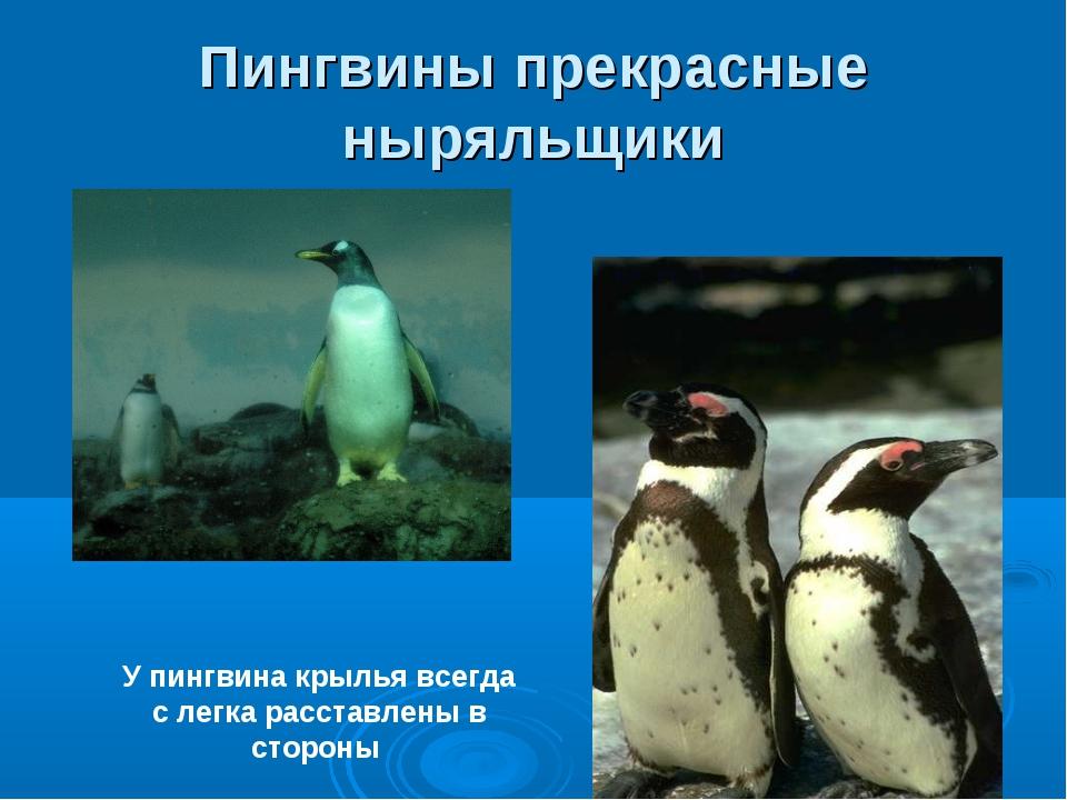 Пингвины прекрасные ныряльщики У пингвина крылья всегда с легка расставлены в...