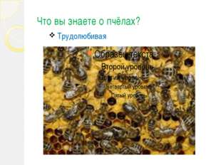 Что вы знаете о пчёлах? Трудолюбивая