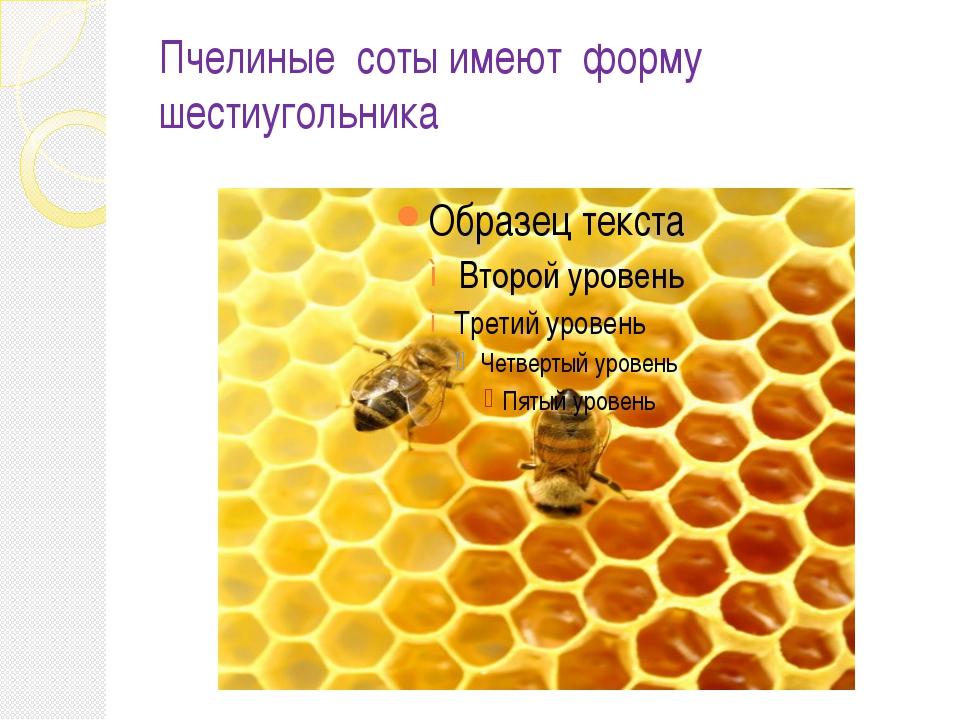 Пчелиные соты имеют форму шестиугольника