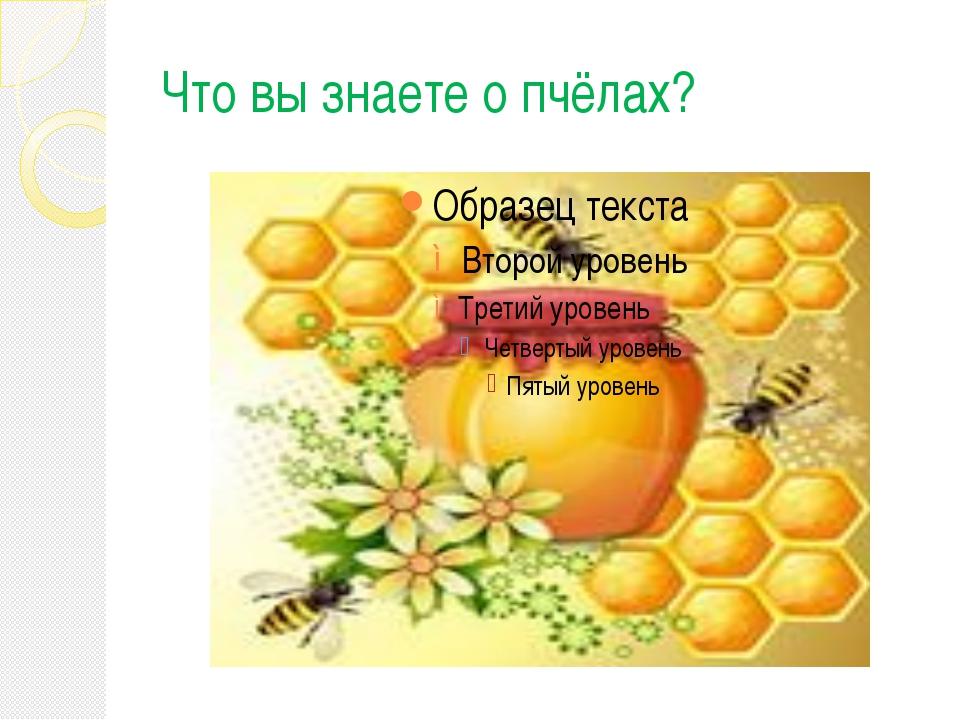 Что вы знаете о пчёлах?