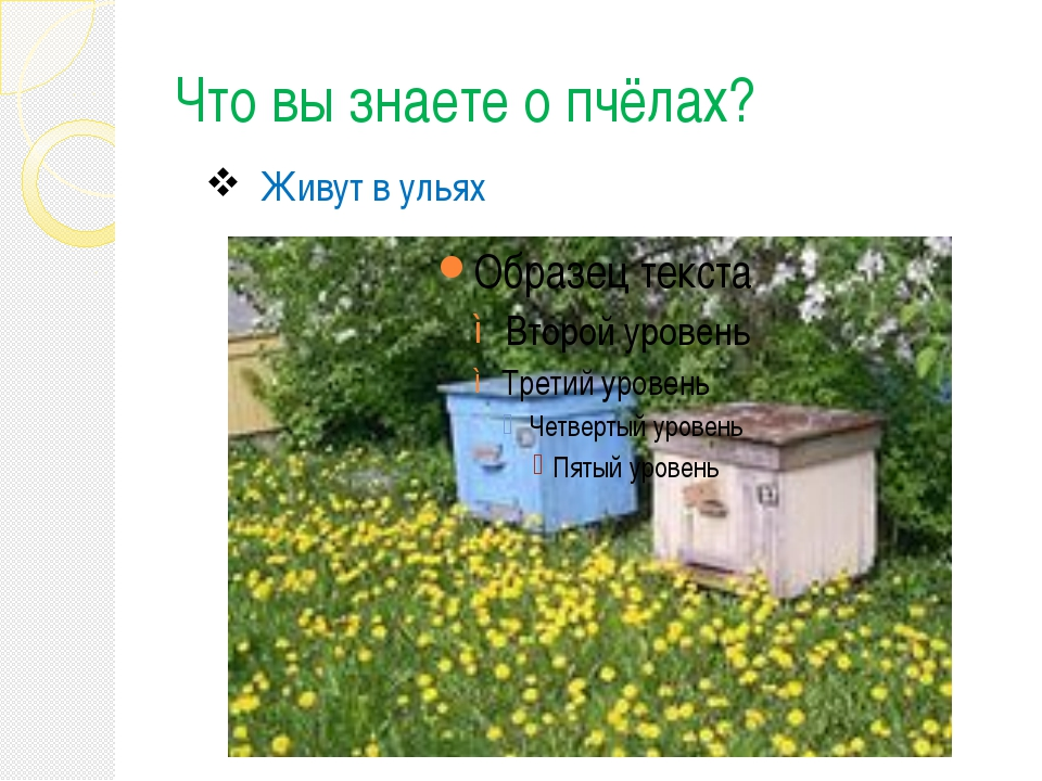 Что вы знаете о пчёлах? Живут в ульях