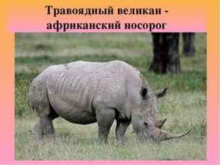 Травоядный великан - африканский носорог
