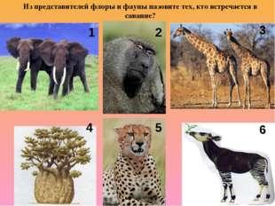 Из представителей флоры и фауны назовите тех, кто встречается в саванне? 1 2