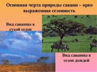 Основная черта природы саванн – ярко выраженная сезонность Вид саванны в сухо