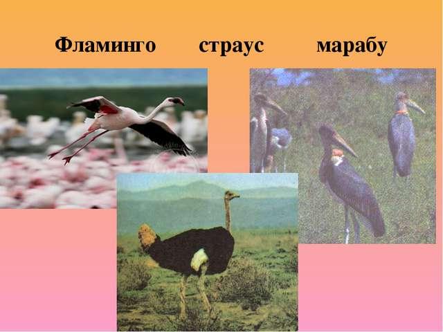 Фламинго страус марабу