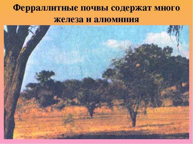Ферраллитные почвы содержат много железа и алюминия